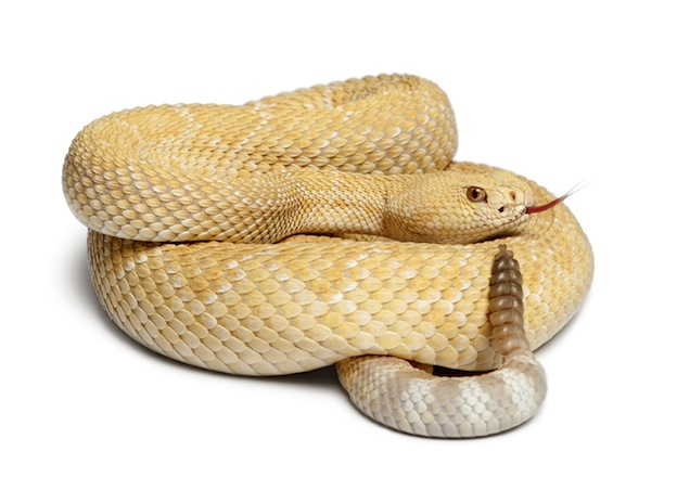 Learn about snake species