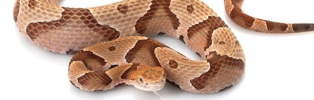 Snake Videos