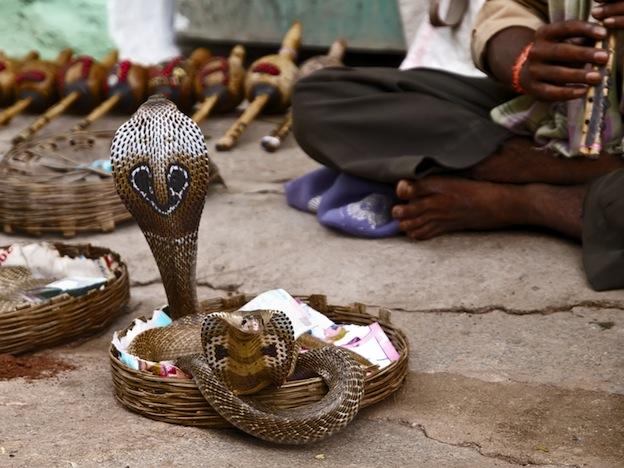 Serpientes en la cultura humana.