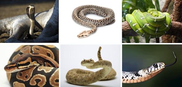 especies_de_serpientes_624
