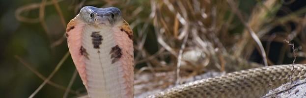 Evolución de las Serpientes