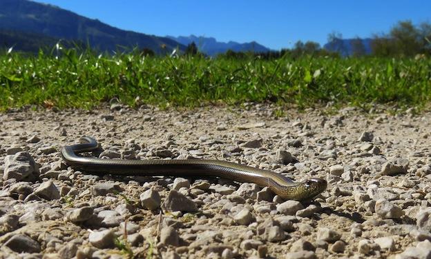 Entorno natural de las serpientes.