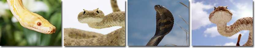 Snake Information