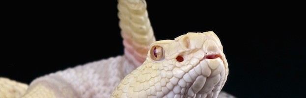 Veneno de las Serpientes